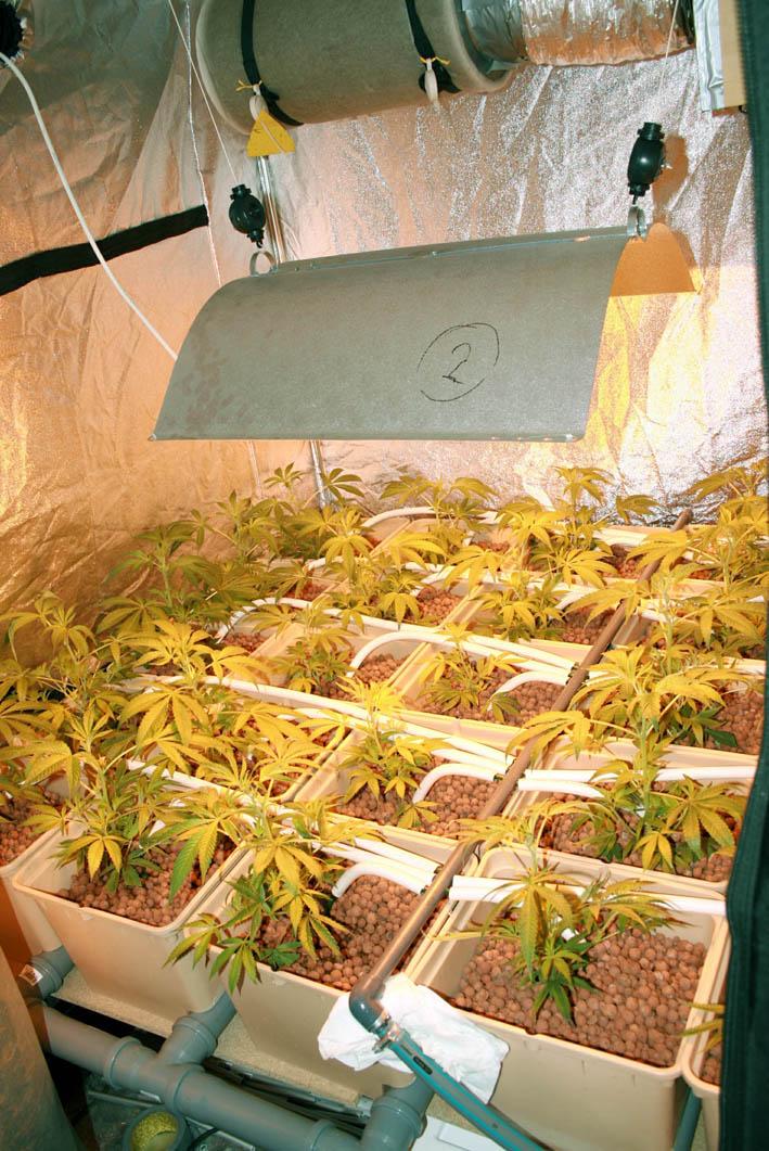 20120209-cannabis