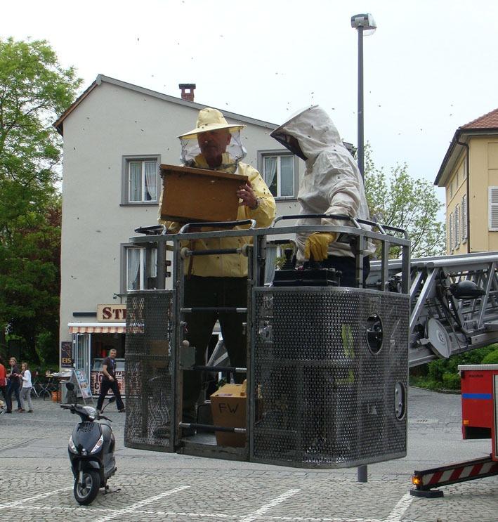 siegfried-heiss ravensburg 08-05-2012 bienenschwarm feuerwehr new-facts-eu