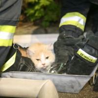 Ulm Wiblingen Küchenbrand Katzen gerettet