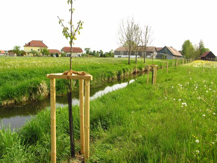 Unter anderem entlang der Roth pflanzte das Landratsamt in Attenhofen gemeinsam mit dem örtlichen Obst- und Gartenbauverein zahlreiche Obstbäume und Linden.                                                               Foto: Michael Angerer