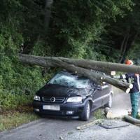 Filzingen-Baum-wis-30-06-14-004