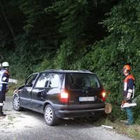 Filzingen-Baum-wis-30-06-14-006