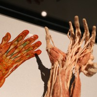02-07-2014-muenchen-ausstellung-koerperwelten-hagen-poeppel-new-facts-eu (18)
