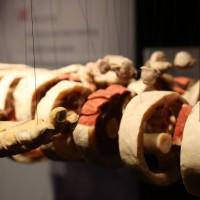 02-07-2014-muenchen-ausstellung-koerperwelten-hagen-poeppel-new-facts-eu (29)