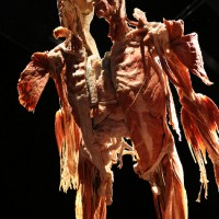 02-07-2014-muenchen-ausstellung-koerperwelten-hagen-poeppel-new-facts-eu (35)