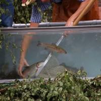 26-07-2014-memmingen-fischertag-fischen-wiegen-koenigsforelle-peta-poeppel-new-facts-eu20140726_0381