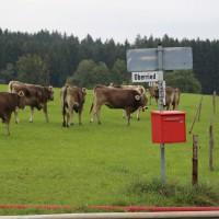 25-09-2014-lindau-heimenkirch-oberried-brand-bauernhof-feuerwehr-poeppel-new-facts-eu (6)