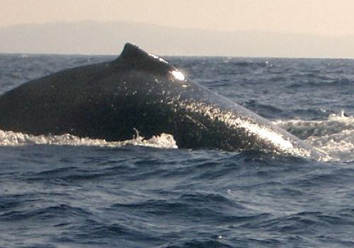 Wale, über dts Nachrichtenagentur