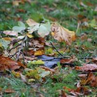 21.10.2014-Unwetter-Dach-abgedeckt-Feuerwehr-Bringezu-New-facts  (3)