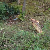 30-10-2014-unfall-toedlich-rot-an-der-rot-biberach-feuerwehr-christoph22-poeppel-new-facts-eu (1)