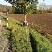 Unfall-Baum-PKW-OAL16-Biessenhofen-Kaufbeuren-frontal-18.10 (11)