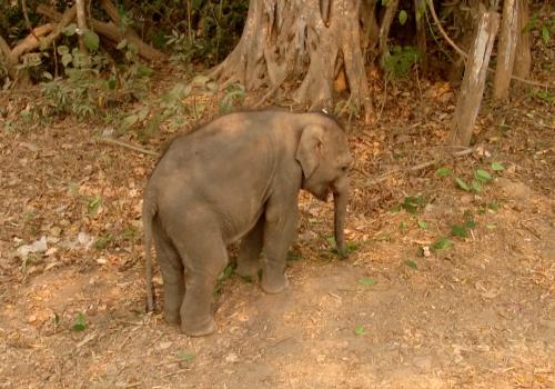 Elefantenbaby, über dts Nachrichtenagentur