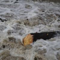 04-01-15_BW_Memmingen_egelsee_Hochwasserlage_Iller_Wasserwerk-Mooshausen_poeppel-new-facts-eu0025