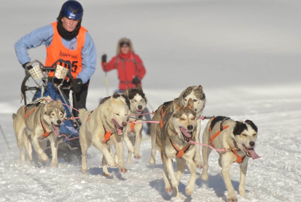 Schlittenhunderennen Alaska
