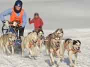 Einen Hauch von Alaska gibt es beim Schlittenhunderennen in Unterjoch. Unser Foto entstand bei Veranstaltungen in den vergangenen Jahren.  Foto: Bad Hindelang Tourismus