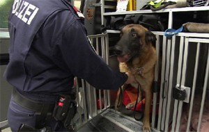 Polizeihund Pressefoto