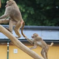 17-06-2015_Tierbilder_Augsburger-Zoo_Poeppel_new-facts-eu0003