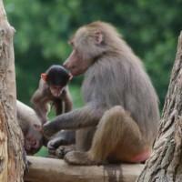 17-06-2015_Tierbilder_Augsburger-Zoo_Poeppel_new-facts-eu0004