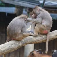 17-06-2015_Tierbilder_Augsburger-Zoo_Poeppel_new-facts-eu0005