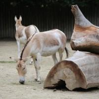 17-06-2015_Tierbilder_Augsburger-Zoo_Poeppel_new-facts-eu0007