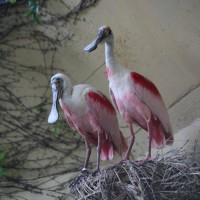 17-06-2015_Tierbilder_Augsburger-Zoo_Poeppel_new-facts-eu0008