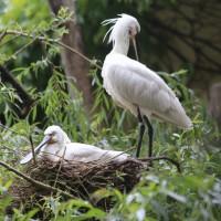 17-06-2015_Tierbilder_Augsburger-Zoo_Poeppel_new-facts-eu0010