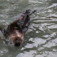 17-06-2015_Tierbilder_Augsburger-Zoo_Poeppel_new-facts-eu0012