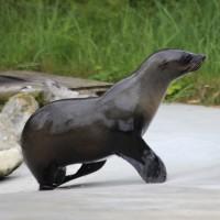 17-06-2015_Tierbilder_Augsburger-Zoo_Poeppel_new-facts-eu0014