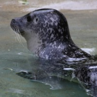 17-06-2015_Tierbilder_Augsburger-Zoo_Poeppel_new-facts-eu0020