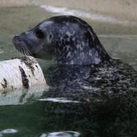 17-06-2015_Tierbilder_Augsburger-Zoo_Poeppel_new-facts-eu0022