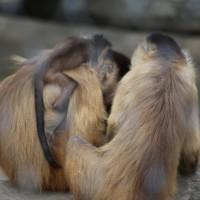 17-06-2015_Tierbilder_Augsburger-Zoo_Poeppel_new-facts-eu0024