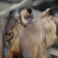 17-06-2015_Tierbilder_Augsburger-Zoo_Poeppel_new-facts-eu0025