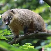 17-06-2015_Tierbilder_Augsburger-Zoo_Poeppel_new-facts-eu0027