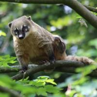 17-06-2015_Tierbilder_Augsburger-Zoo_Poeppel_new-facts-eu0028