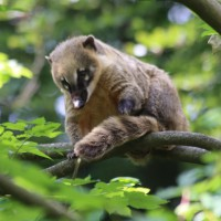 17-06-2015_Tierbilder_Augsburger-Zoo_Poeppel_new-facts-eu0029