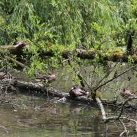 17-06-2015_Tierbilder_Augsburger-Zoo_Poeppel_new-facts-eu0030