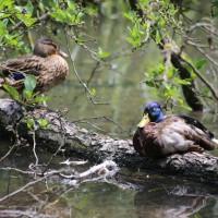 17-06-2015_Tierbilder_Augsburger-Zoo_Poeppel_new-facts-eu0031