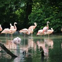 17-06-2015_Tierbilder_Augsburger-Zoo_Poeppel_new-facts-eu0032