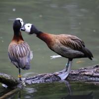 17-06-2015_Tierbilder_Augsburger-Zoo_Poeppel_new-facts-eu0034