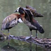 17-06-2015_Tierbilder_Augsburger-Zoo_Poeppel_new-facts-eu0035
