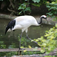 17-06-2015_Tierbilder_Augsburger-Zoo_Poeppel_new-facts-eu0036