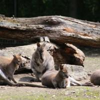 17-06-2015_Tierbilder_Augsburger-Zoo_Poeppel_new-facts-eu0040