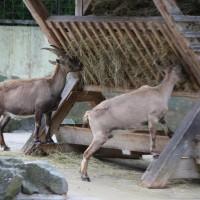 17-06-2015_Tierbilder_Augsburger-Zoo_Poeppel_new-facts-eu0041