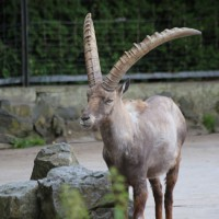 17-06-2015_Tierbilder_Augsburger-Zoo_Poeppel_new-facts-eu0042