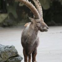 17-06-2015_Tierbilder_Augsburger-Zoo_Poeppel_new-facts-eu0043