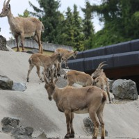 17-06-2015_Tierbilder_Augsburger-Zoo_Poeppel_new-facts-eu0044