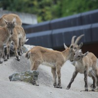 17-06-2015_Tierbilder_Augsburger-Zoo_Poeppel_new-facts-eu0045
