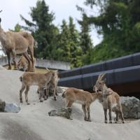 17-06-2015_Tierbilder_Augsburger-Zoo_Poeppel_new-facts-eu0046