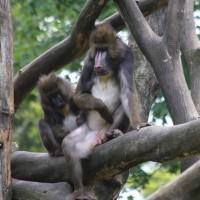 17-06-2015_Tierbilder_Augsburger-Zoo_Poeppel_new-facts-eu0047
