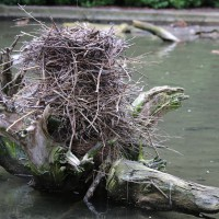 17-06-2015_Tierbilder_Augsburger-Zoo_Poeppel_new-facts-eu0048